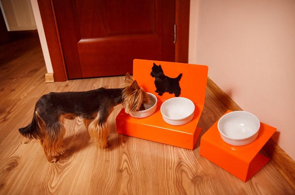 Чем кормить йоркширского терьера в домашних условиях: меню на неделю и рейтинг сухого корма для щенка