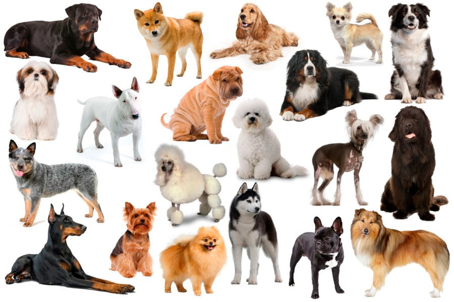 Картинки и породы все собак