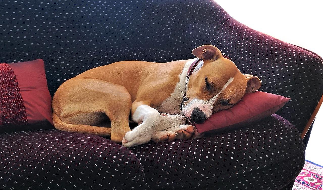 Сколько времени должна спать собака в сутки: возраст, нагрузка и режим дня