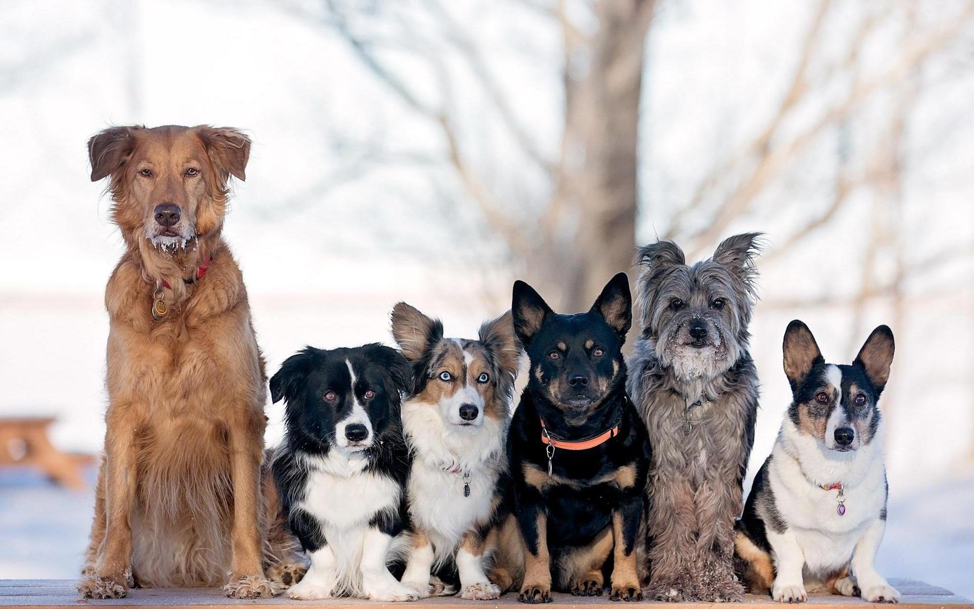 выбор собак с картинками нам показалась мало