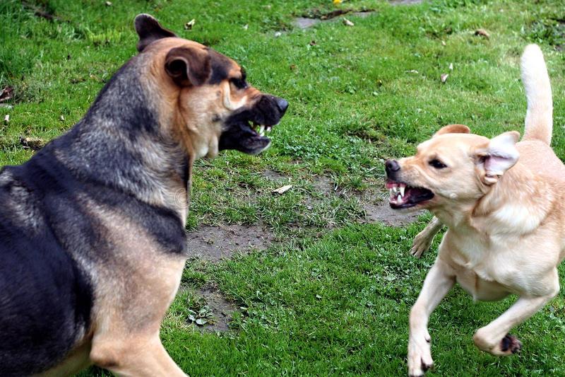 Собака рычит на хозяина: что делать и как воспитать