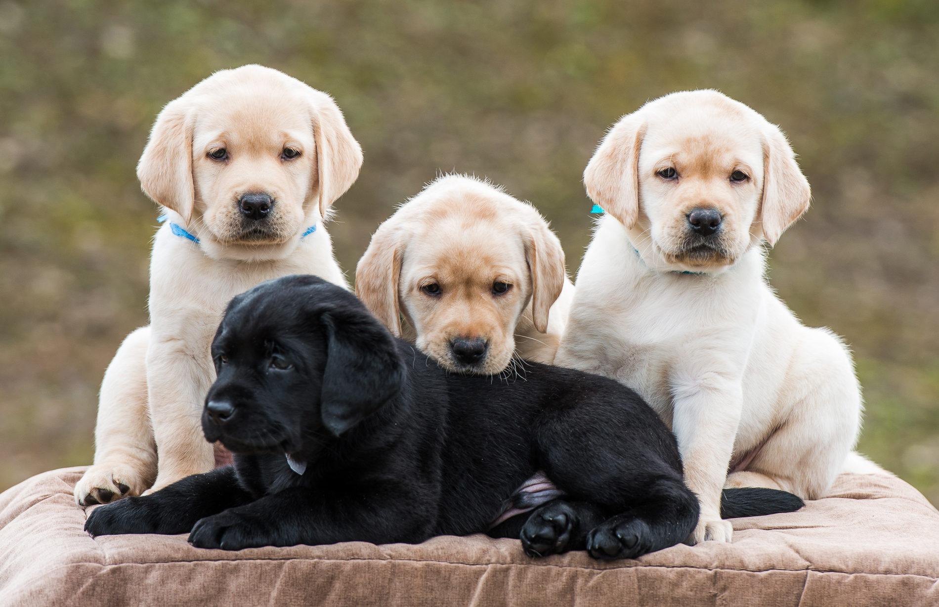 Все собаки картинки и сколько стоят