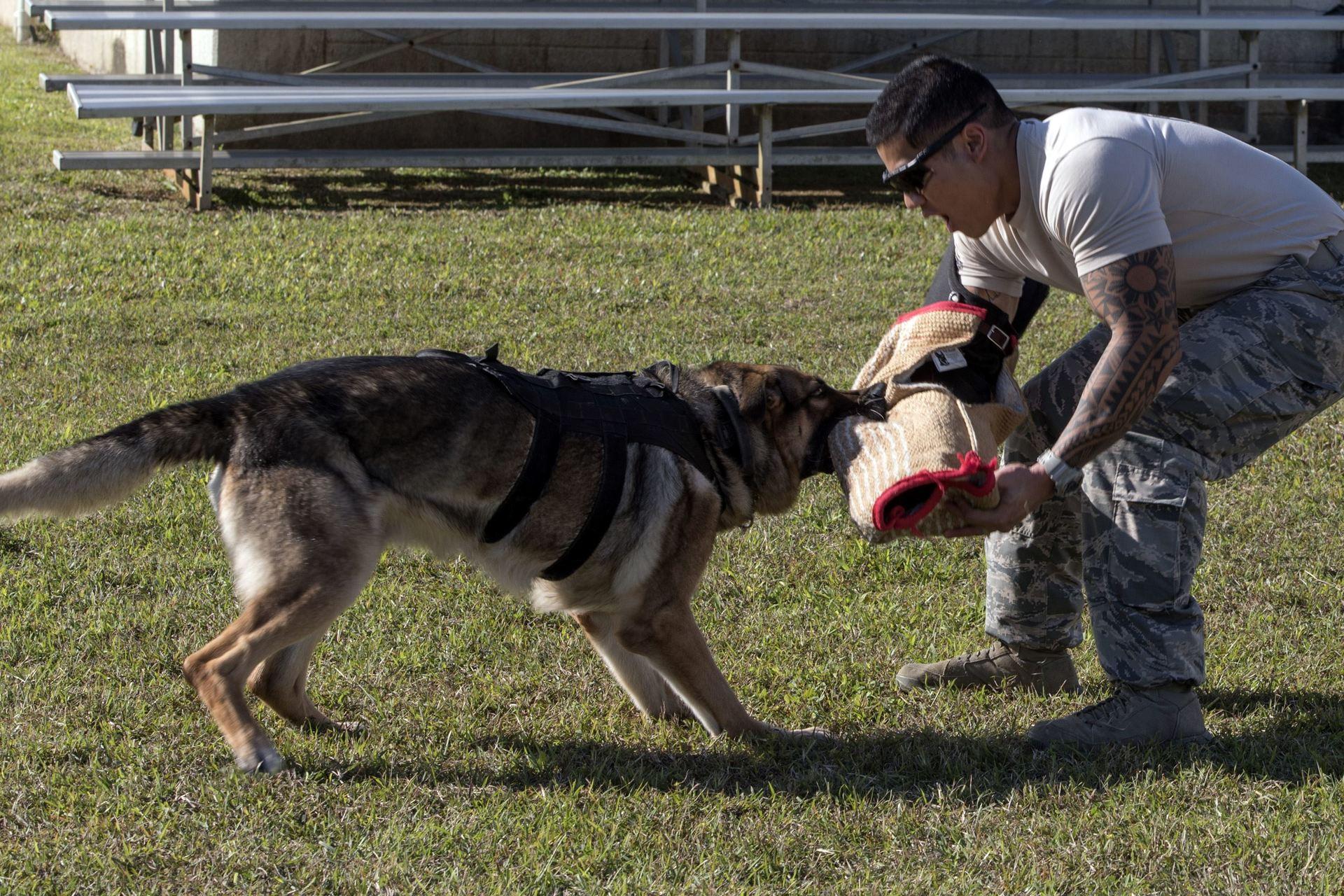 5 пород собак с самой «чудовищной» силой укуса. Собаки, которые могут противостоять любому противнику: описание